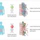 Υπάρχει κληρονομικότητα στα εντερο-βακτήρια , που προκαλούν τη νόσο του Crohn και της ελκώδους κολίτιδας